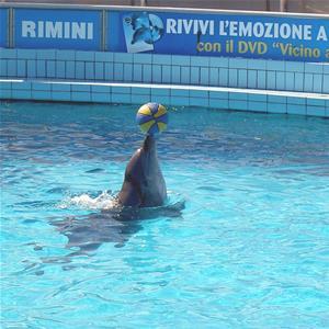 Delfinario Riccione