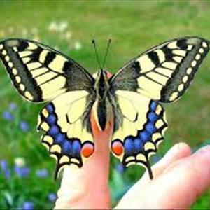 Apertura Casa delle Farfalle!
