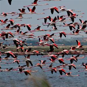 Birdwatching Parco del Delta Sta ...